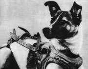 لايکا با يراق آلات فضانورديش