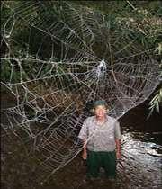 تار عنکبوتی به طول دو اتوبوس