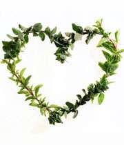 گیاه درمانی قلب