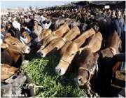 عید قربان در کشورهای جهان اسلام