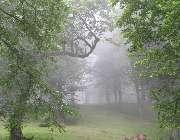 جنگل دالخانی
