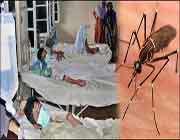 ڈینگی بخار