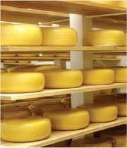 پوششهای خوراکی نانویی بر روی پنیر