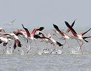 göçmen kuşlar iran'ın güneyine gelmeye başladı