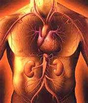 human beings body