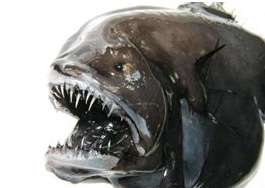 ماهی کلهدراز خیالباف