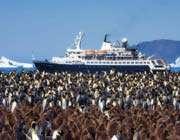 un bateau devant des milliers de pingouins