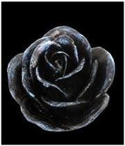 une rose ouverte