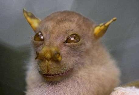 خفاش دماغ لوله ای