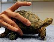 une tortue blessée