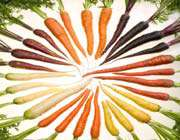 carrots_ of_many_colors