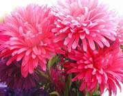 colofrul flowers