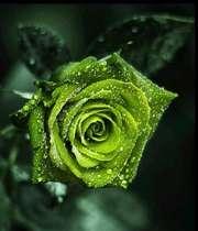 ديدار سبز