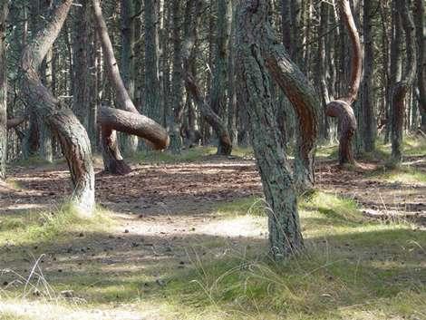 جنگل روسیه