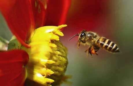 نابودی کلونی زنبورها