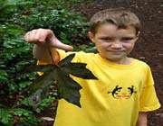 child_leaf