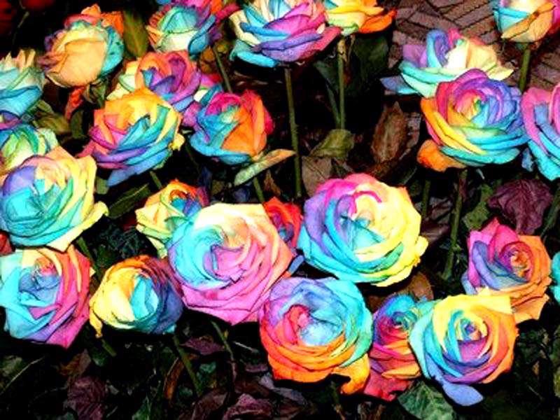 گروه تلگرام لینک رنگین کمان انجمن راسخون - رنگین کمان های زمینی