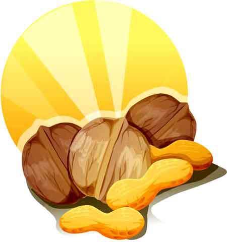 میوه ی گرد و چوبی