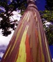 درخت های نقاش