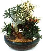 indoor_plant
