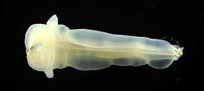 موجودات اقیانوس