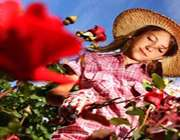 raise-rose-garden