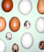 تخم پرندگان