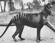 حيوانات انقرضت بفعل الإنسان