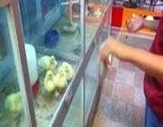 tiny ducks love yo-yo's