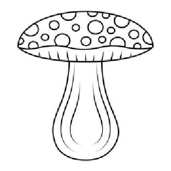 قارچ جنگلی