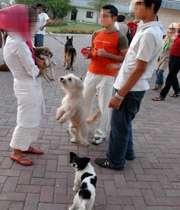 نا  امنی اجتماعی سگ