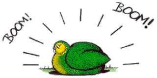 کاکاپو،پرنده اي خاص