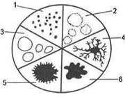 کشت باکتری در محیط کشت مایع