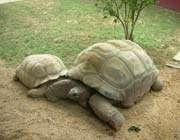 iki kaplumbağa arkadaşlığı