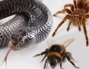 ترس غیر طبیعی از حشرات یا فوبیا