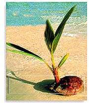 росток пальмы