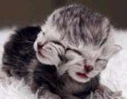 two-faced-kitten