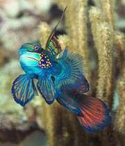 coolest-fish