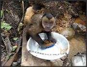 dishwasher monkey