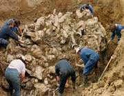 убийство тысяч мусульман в боснии было «преднамеренным и заранее обдуманным»