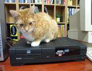 cat and cd