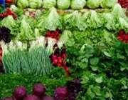 کاهو و سبزیجات