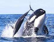 whalebarcroft
