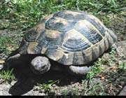 kendini aynada gören kaplumbağa