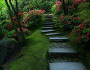 шаги к раю