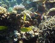 الحيّد المرجاني العظيم - أستراليا