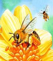 النحلة والفراشة