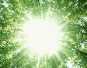 نور آفتاب از بین درختان