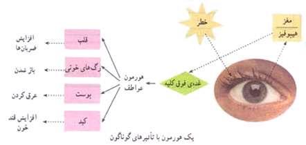 هماهنگی و ارتباط بدن (دستگاه هورمونی)