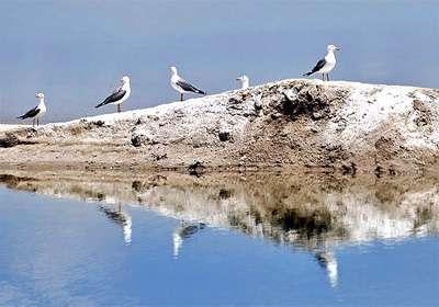 بهترین جا برای تماشای پرندگان مهاجر